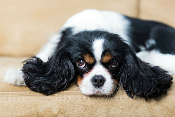 Cute Small Dogs Cutest Dog Breeds That Stay Small