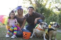 Your Ultimate Dog Halloween Costume Guide  American ...