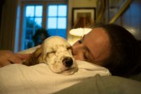 Should I Let My Dog Sleep With Me?  American Kennel Club