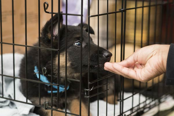 Image result for german shepherd puppy in a crate free image
