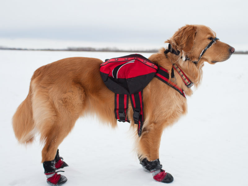 Top 10 Dog Boots for Winter & Cold Weather  American