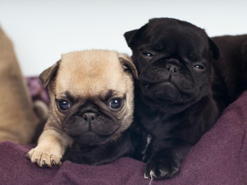 cute small dogs cutest