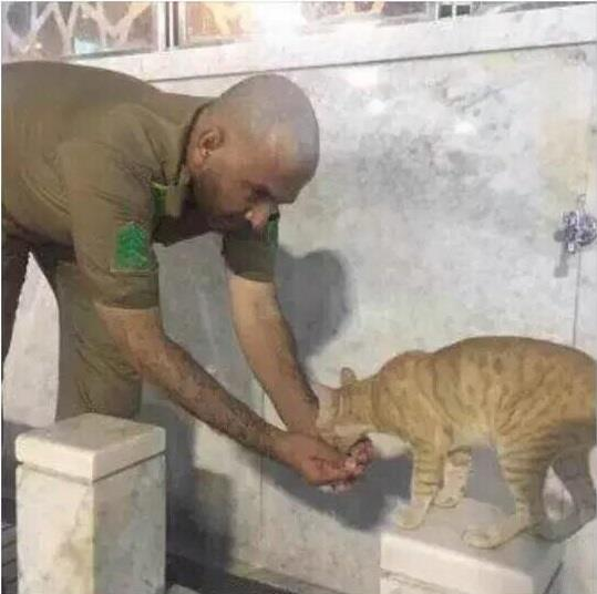 «قطة» تهب رجل أمن وجبة غذاء مجانية