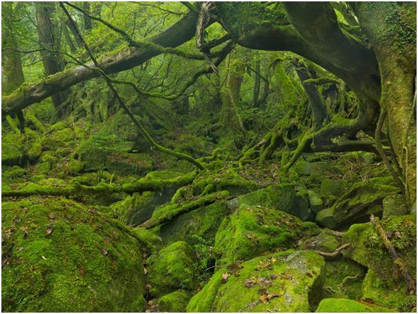 """رغم أن الجزيرة شبه الاستوائية """"ياكوشيما"""" مكان مفضل لليابانيين منذ فترة طويلة، إلا أنها لم تلفت نظر الزوار إليها إلا مؤخرا، تقع"""