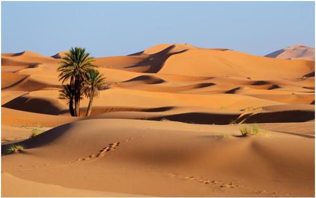 تعد الصحراء الكبرى أكبر الصحاري الحارة الموجودة في العالم، إذ تمتد عبر 10 بلاد في شمال أفريقيا بمساحة 9 ملايين كيلومتر، أي أن