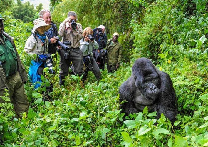 السياحة في أوغندا.. جولة إلى لؤلؤة أفريقيا الساحرة
