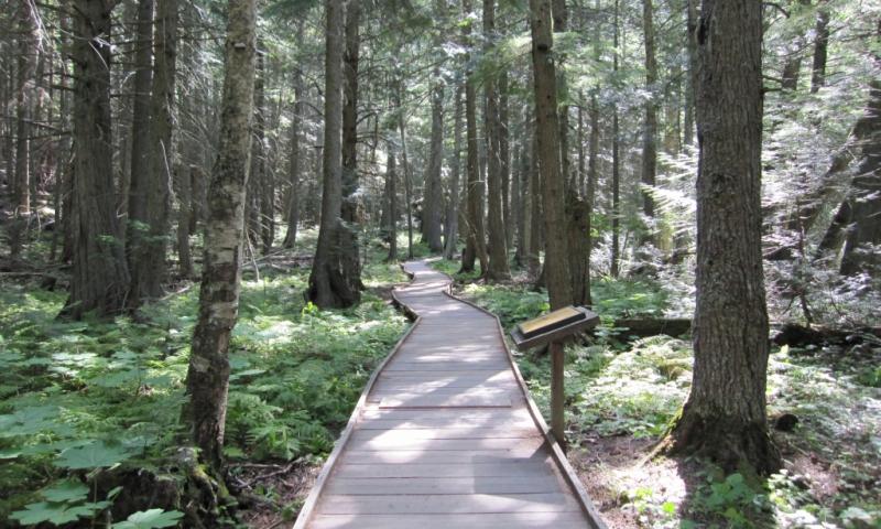 Trails of the Cedars Nature Trail Glacier National Park