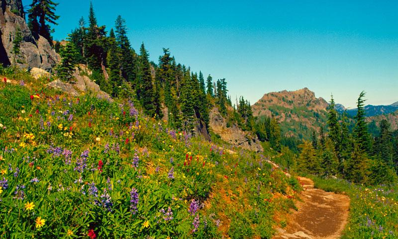 Pacific Crest Trail In Washington Alltrips