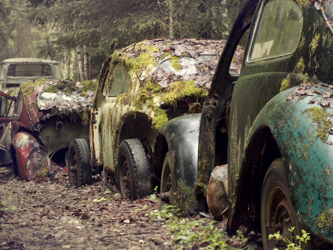 Fall Wallpaper Photos Microsoft Volkswagen Beetle Cars Moss Old Rusted Wallpaper