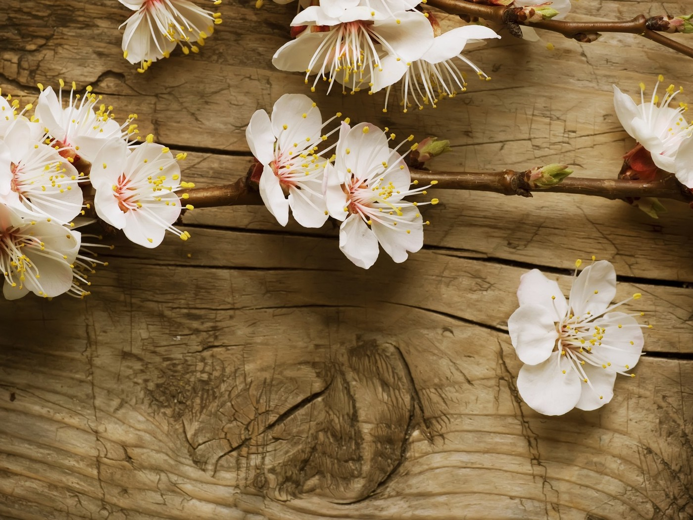 Iphone X Cherry Blossom Wallpaper Branch Of Cherry Blossom Wallpaper Allwallpaper In 5695
