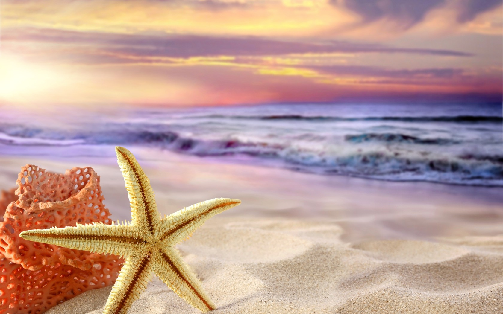 Iphone 5 Hd Wallpaper Nature Starfish Wallpaper Allwallpaper In 14908 Pc En