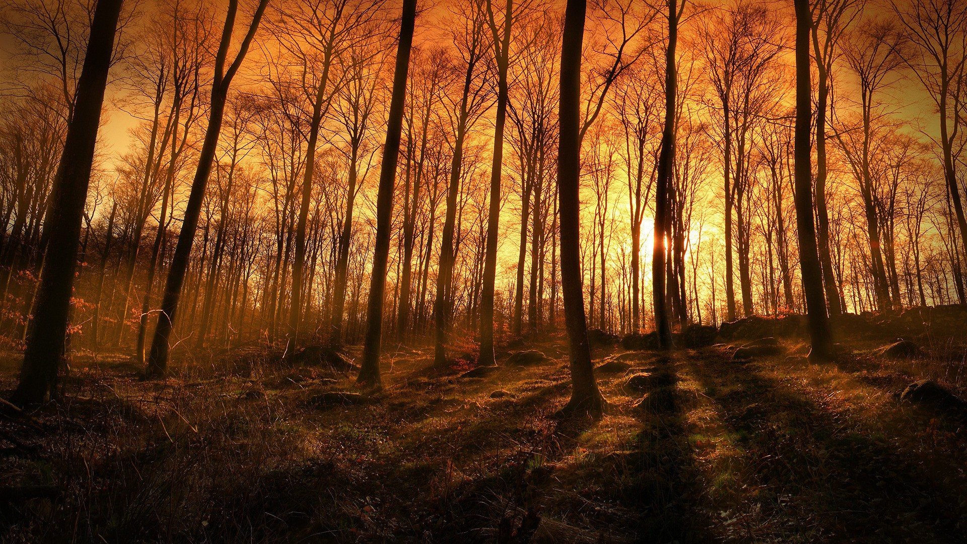 Free Wallpaper Fall 1600x900 Sunset Sunbeams Coming Through The Forest Wallpaper