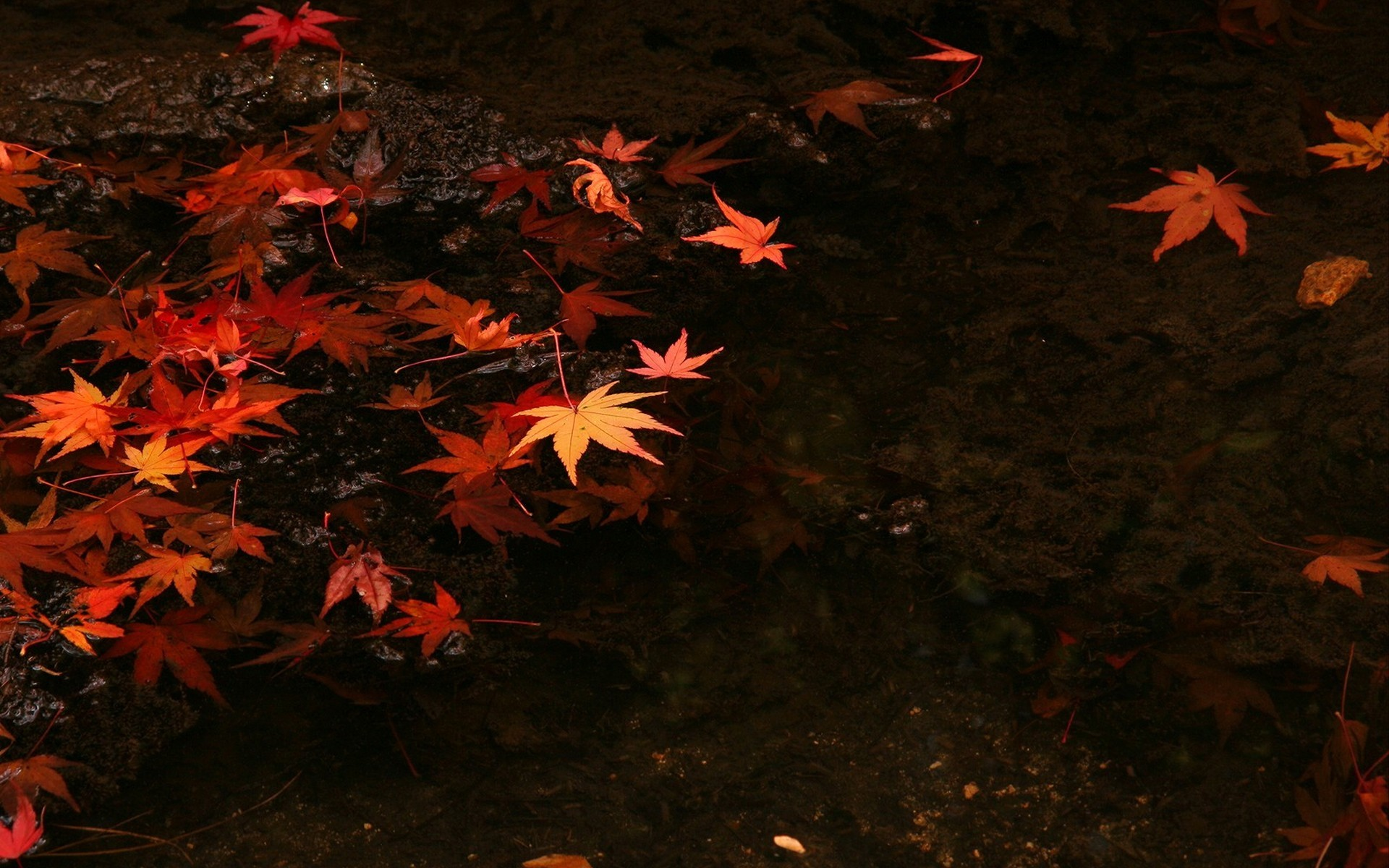Dark Fall Iphone Wallpaper Water Japan Nature Leaves Wallpaper Allwallpaper In