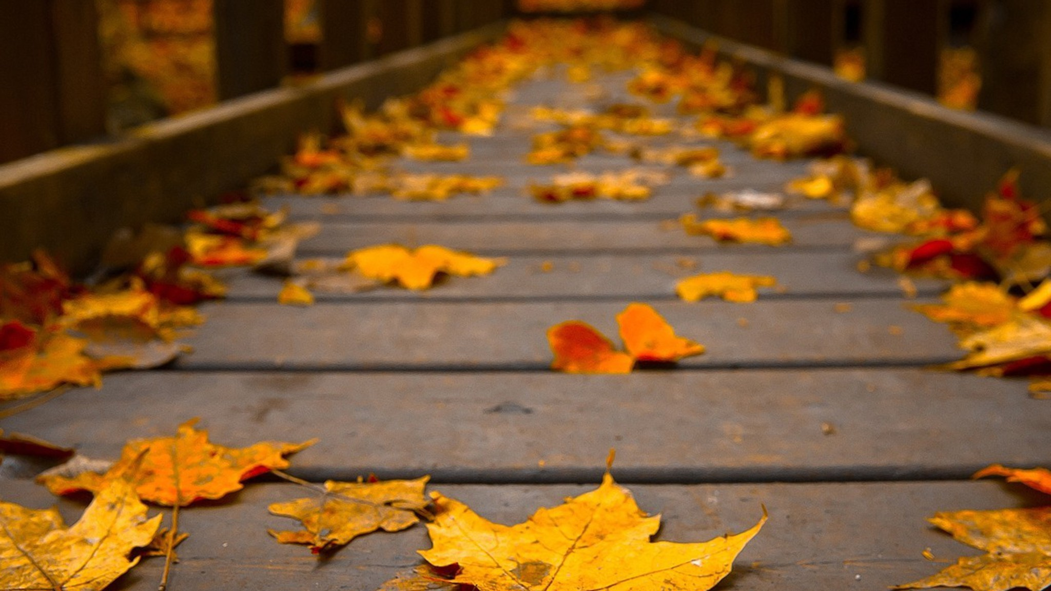 Falling Leaves Wallpaper For Iphone Woods Wooden Bridge Colors Peaceful View Autumn Wallpaper