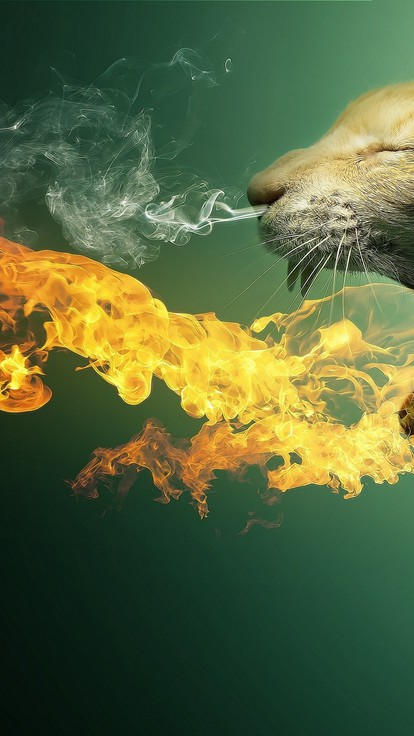 Cute Hd Mobile Wallpaper Download Cats Fire Photo Manipulation Wallpaper Allwallpaper In