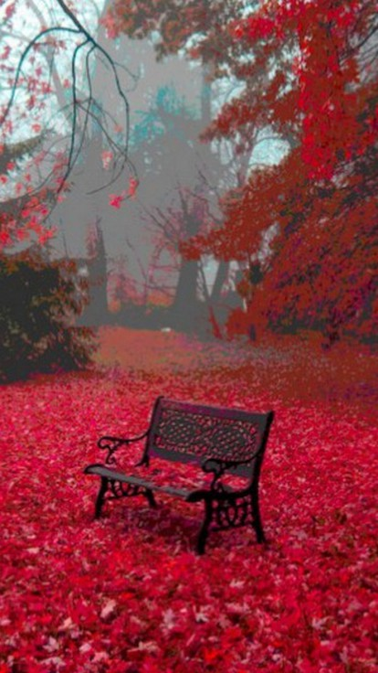 Fall Wallpaper Photos Microsoft Leaves Bench Serene Carpet Surrounded Background Sea