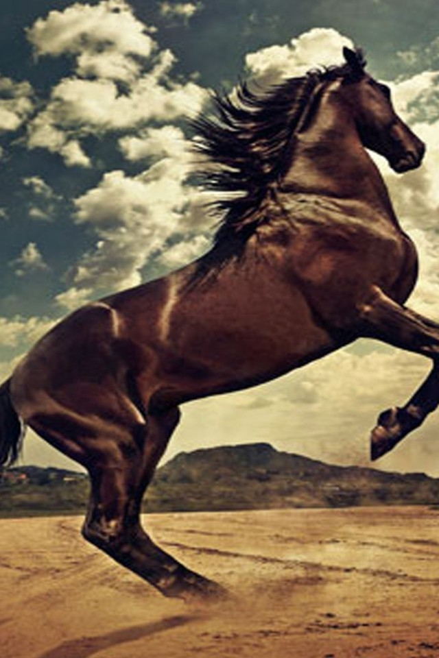 Iphone Wallpaper Hd Red Rising Horse Wallpaper Allwallpaper In 12354 Pc En