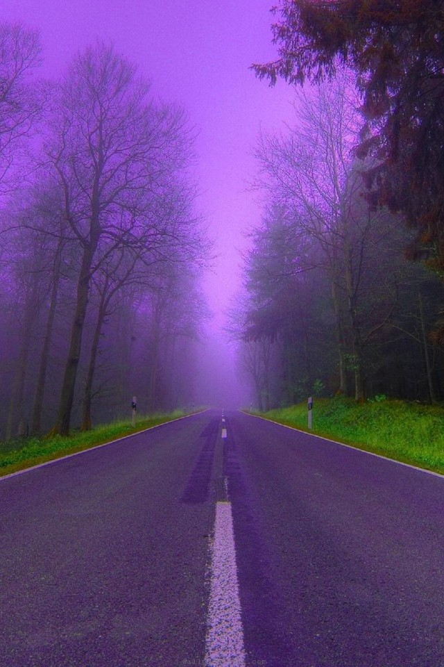 Aesthetic Wallpaper Iphone Nature Trees Purple Fog Woods Roads Way Wallpaper