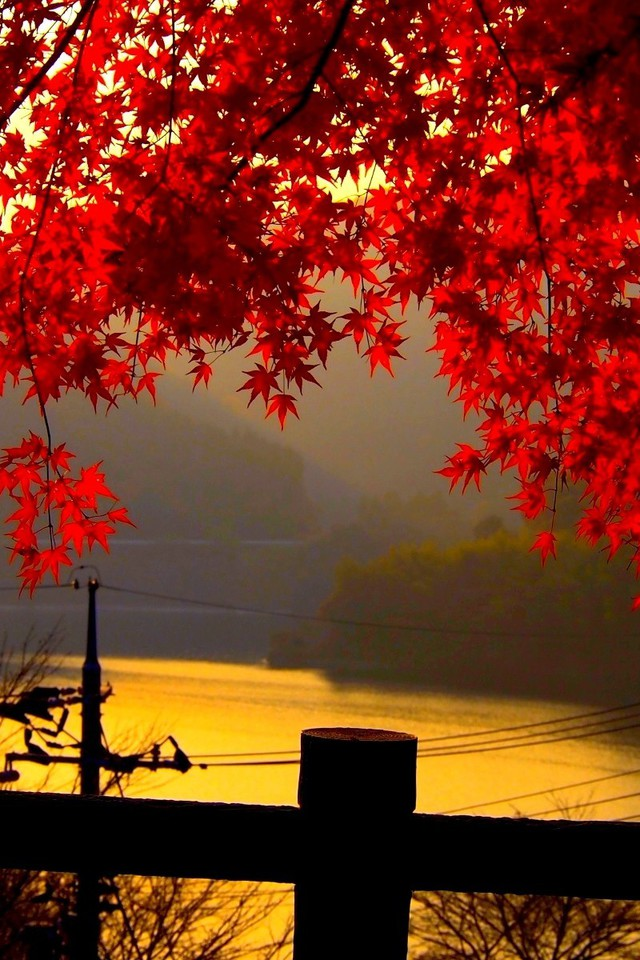 Fall Scenes Desktop Wallpaper Red Autumn Leaves At Dusk Wallpaper Allwallpaper In