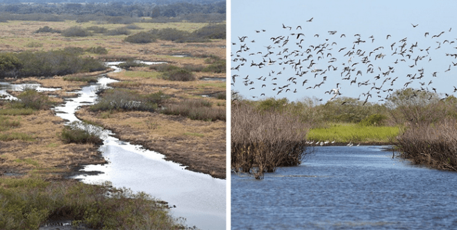 <strong>Restored Kissimmee River</strong><br />PHOTOS COURTESY OF THE SOUTH FLORIDA WATER MANAGEMENT DISTRICT