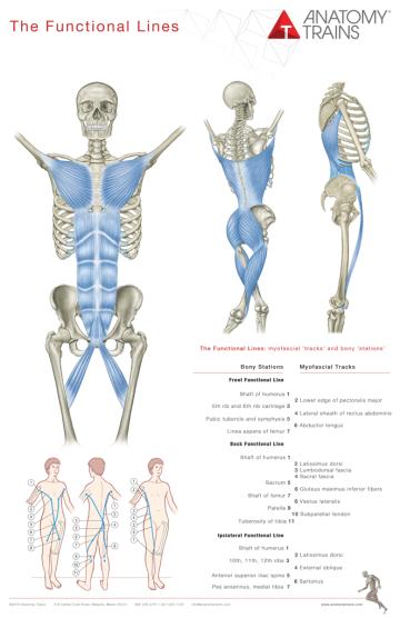 https://i0.wp.com/cdn.anatomytrains.com/wp-content/uploads/2014/01/posterfl1.png?resize=360%2C556&ssl=1