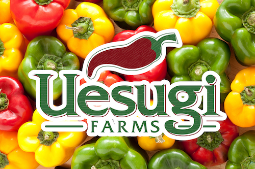 Uesugi Farms On Target for Successful 2016 Northern