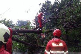 Damkar tangani pohon tumbang timpa mobil di Kebayoran Baru