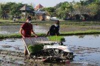 Badung dorong petani hasilkan produk pertanian berkualitas