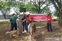 CCEP Indonesia donasikan 51 hewan kurban di Jawa-Bali