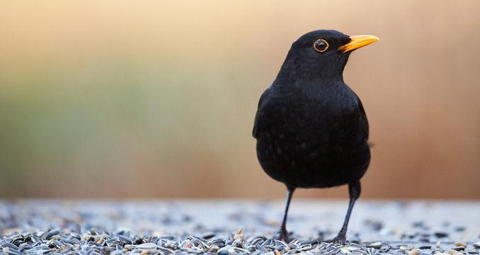 Vögel Im Winter Richtig Füttern ANTENNE BAYERN