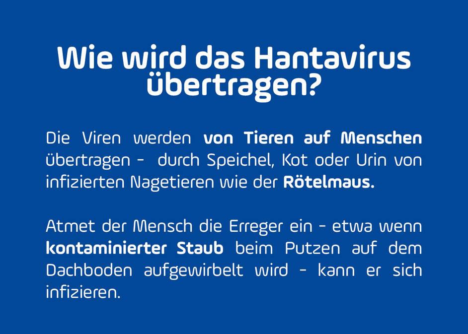 Mehr Fälle von gefährlichen Hantaviren in Bayern: So schützt ihr ...