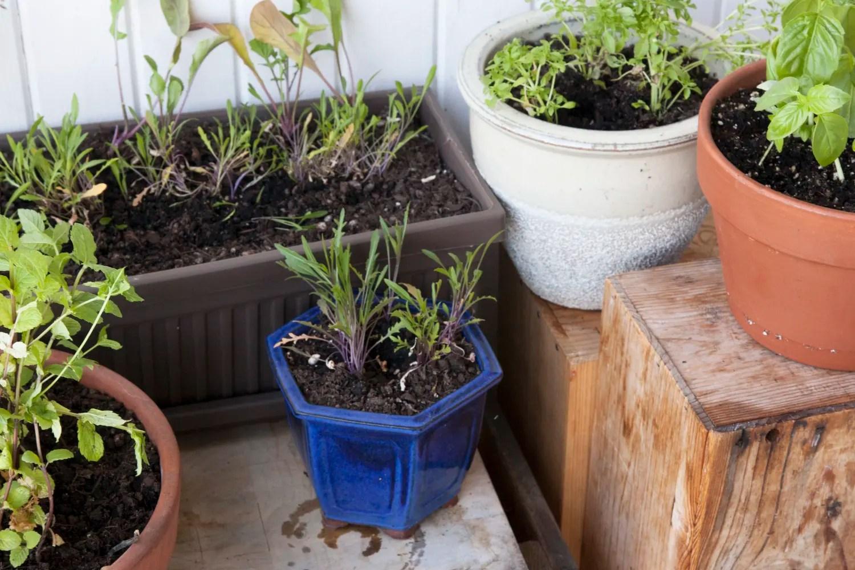 The 4 Easiest Things To Grow In Your Indoor Garden