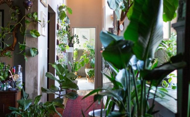 Hilton Carter Plant Doctor Industrial Loft Home Photos
