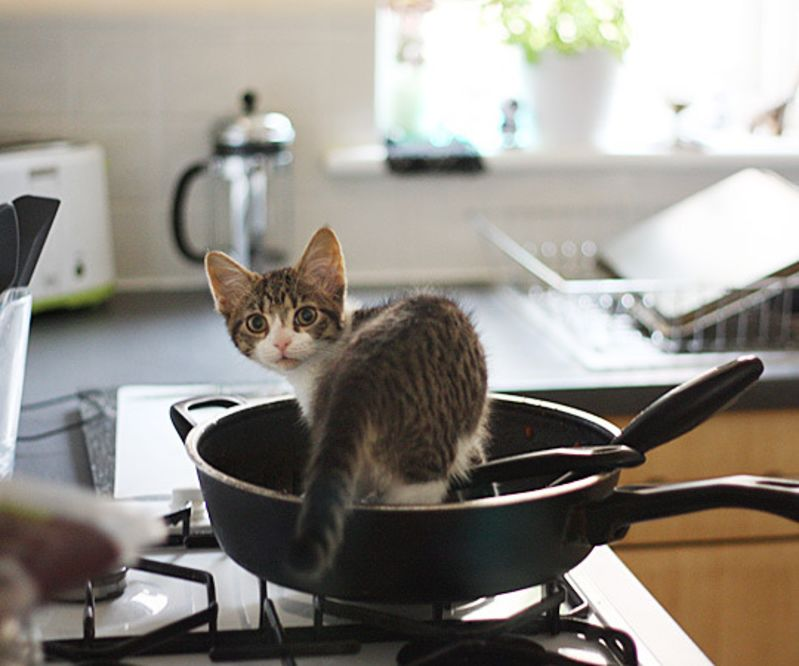 cats in the kitchen commercial faucets kittens a cuteness break for your post holiday image flickr member kaelin fe licensed under creative commons