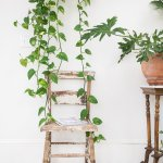 Pothos Plant Care How To Grow Maintain Pothos Plants Apartment Therapy