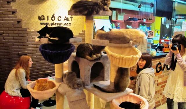 10 Weird But Wonderful Themed Cafes and Restaurants