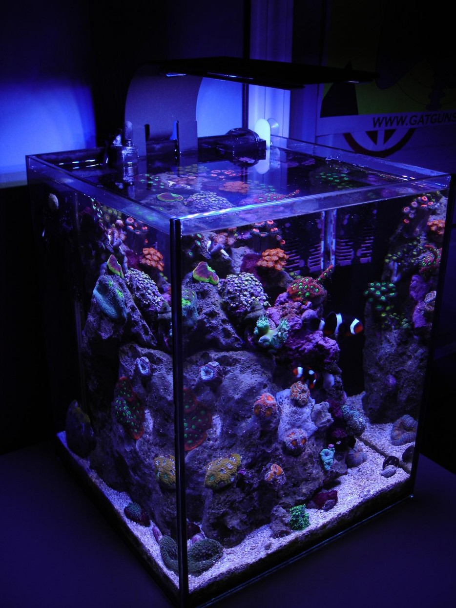 30 Incredibly Awesome Ideas To Beautify Your Home With Aquariums