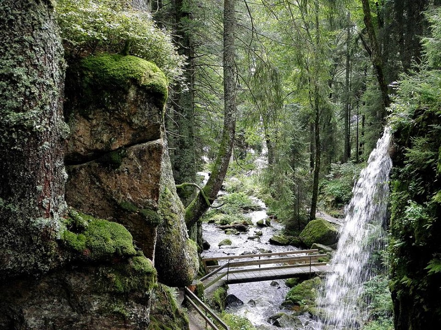 The 34 Most Beautiful Forests In The World Id Love To