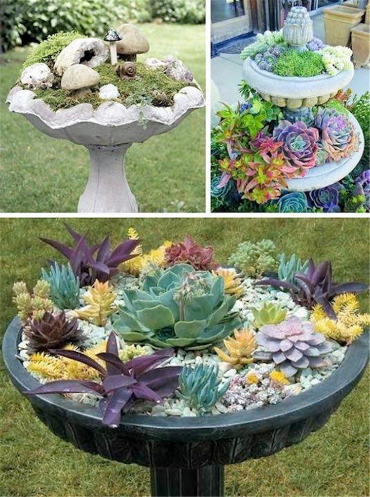 Fairy Garden Design Ideas