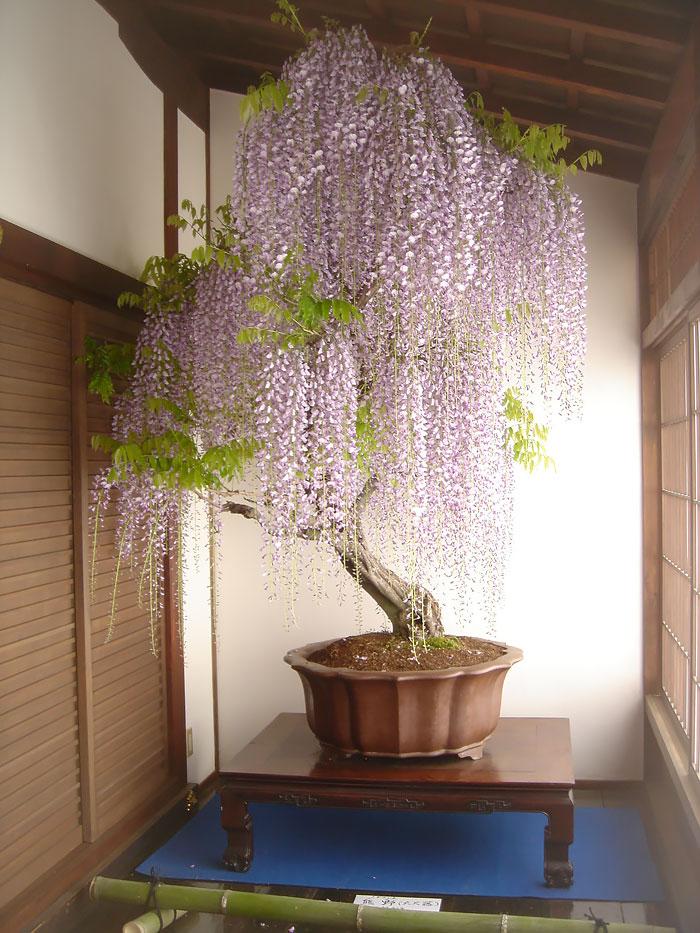 Indoor Beautiful Most Plants