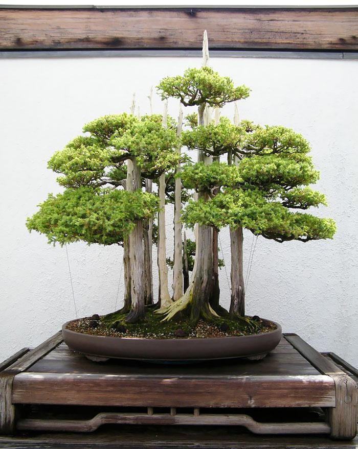 AD-Amazing-Bonsai-Trees-09