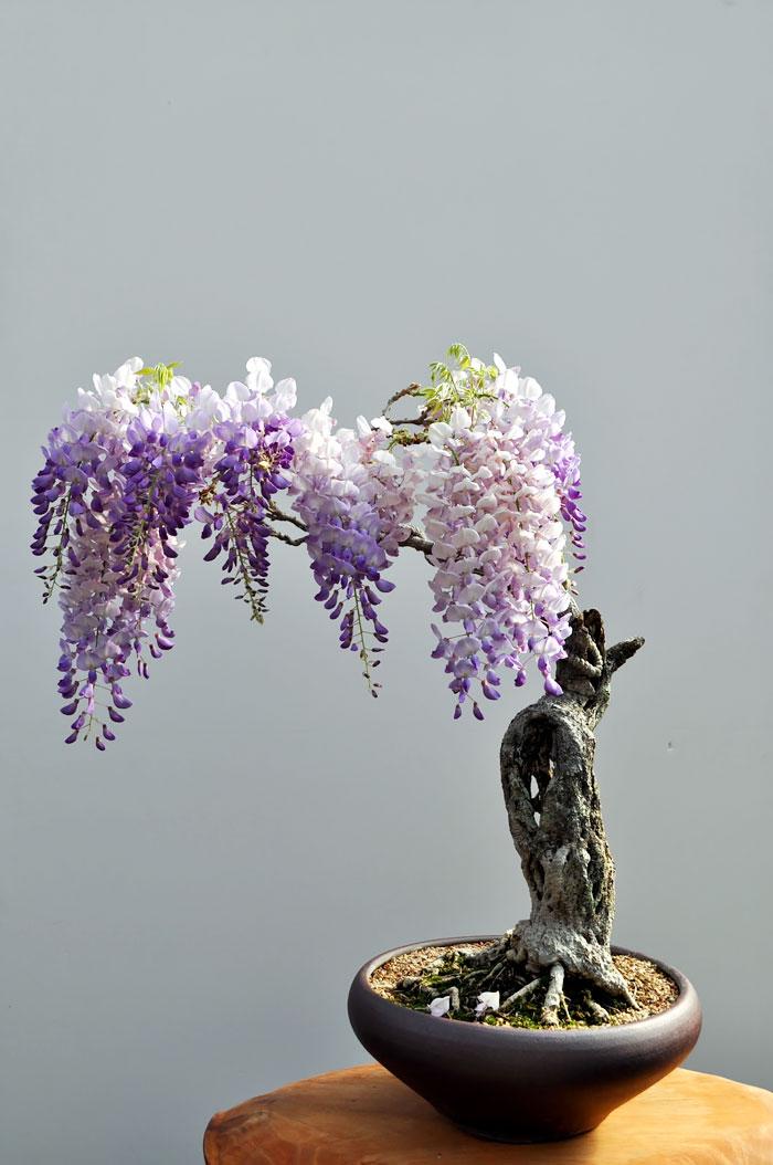 AD-Amazing-Bonsai-Trees-11