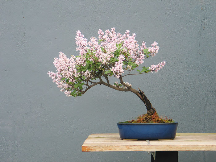 AD-Amazing-Bonsai-Trees-20