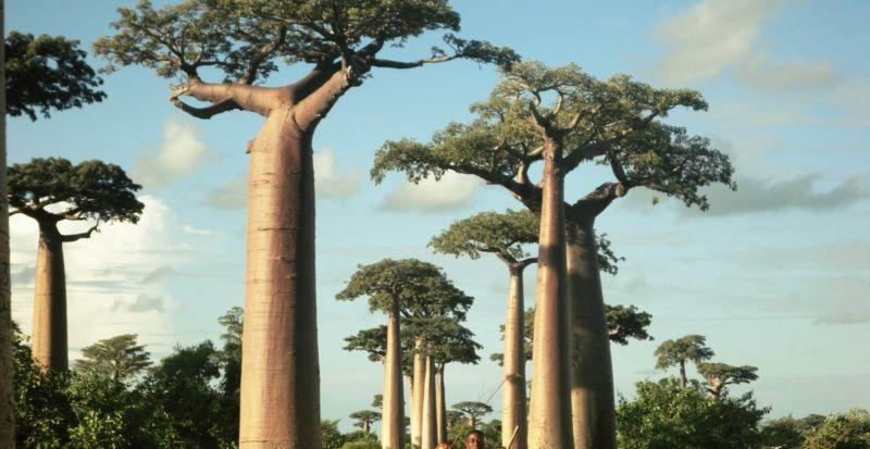 tree of life facing