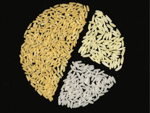 Rice grains in different shades of yellow.