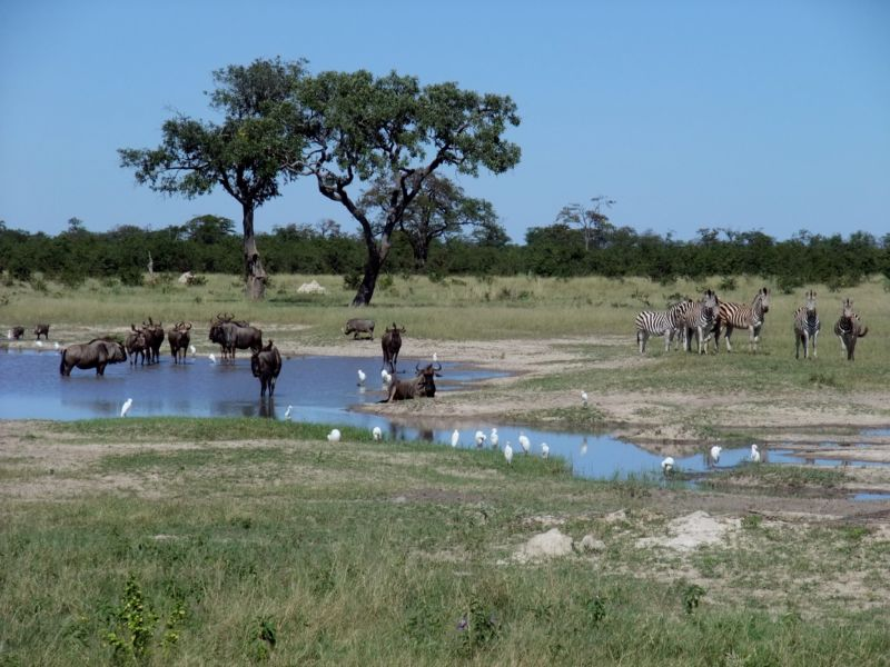 200,000 years ago, parts of the Kalahari Desert in southern Africa looked a lot like the  Okavango Delta in Botswana.