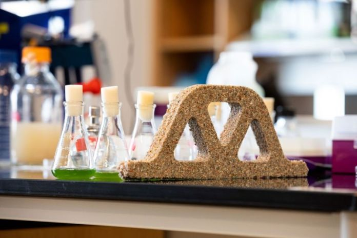 Pequenos frascos de líquido verde em uma bancada de laboratório perto de um arco cor de areia.