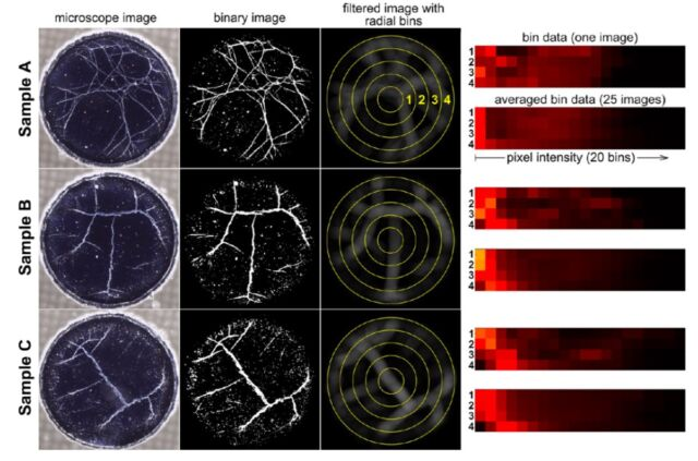 Analysis of microscope images of web patters from American whiskey samples.