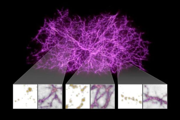 The reconstruction of the cosmic web - a vast network of fibrous structures of matter scattered throughout the universe - is based on patterns of textile mold growth.