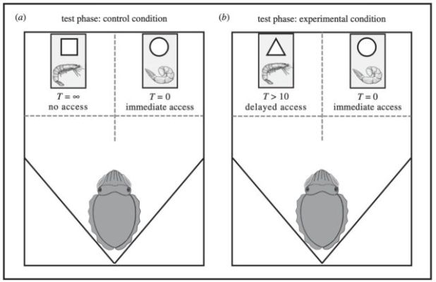 Schematic of test conditions in delay maintenance work: (a) control conditions, and (b) experimental conditions.
